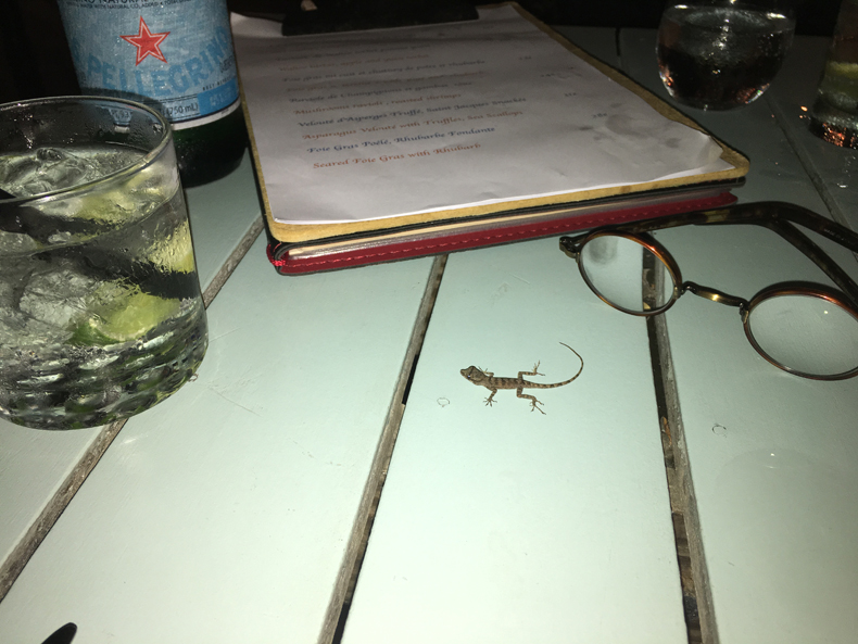 gecko joins us for dinner